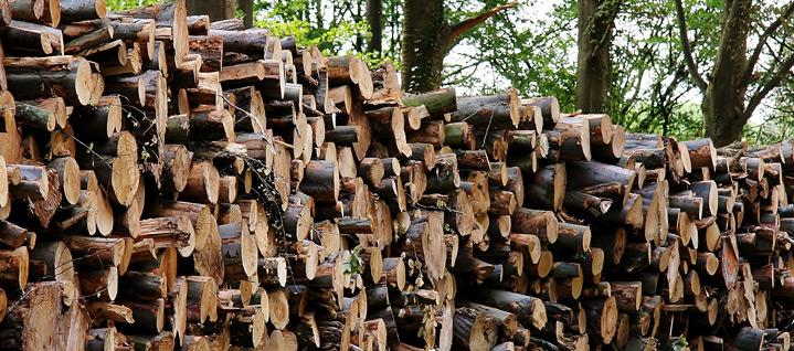 Livraison bois de chauffage Mably
