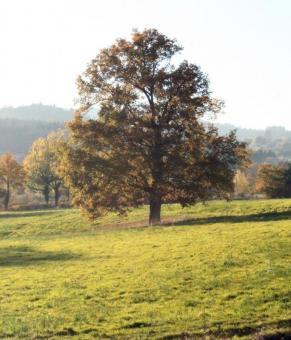 Bois de chauffage Roanne